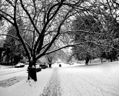 Dude Chilling Park Snow 5