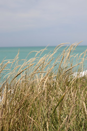 normanby beach timaru south canterbury new zealand scenic landscape