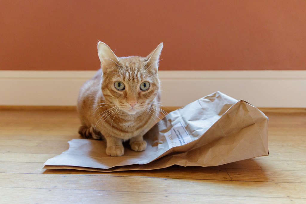 Our cat Sam sits on a paper bag