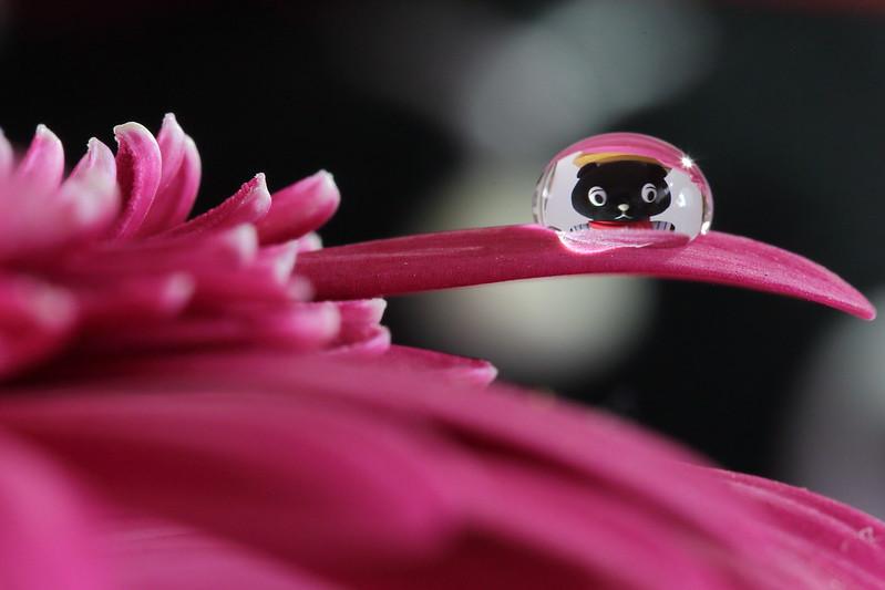 dew-flickr02