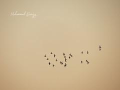 flock/ group of birds