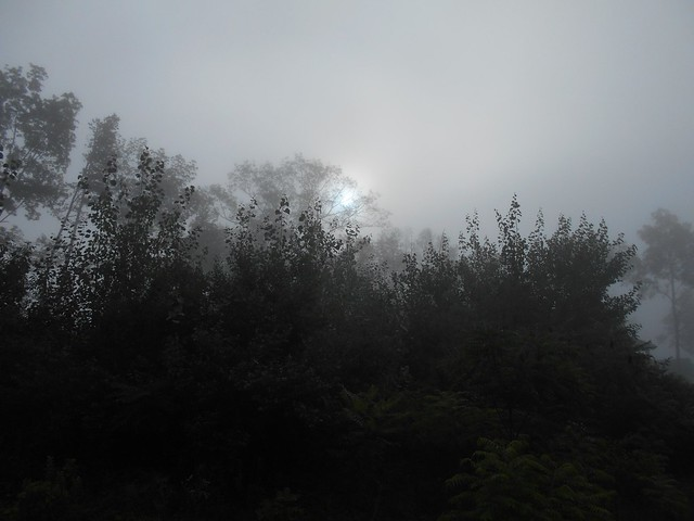 sun through mist