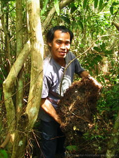 Orangutan Foundation International Employee Spotlight Pak Santo Sun Bears