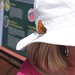 Butterfly on Hat