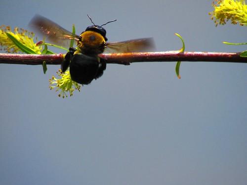 bee closeup. Photographer Joann Kraft