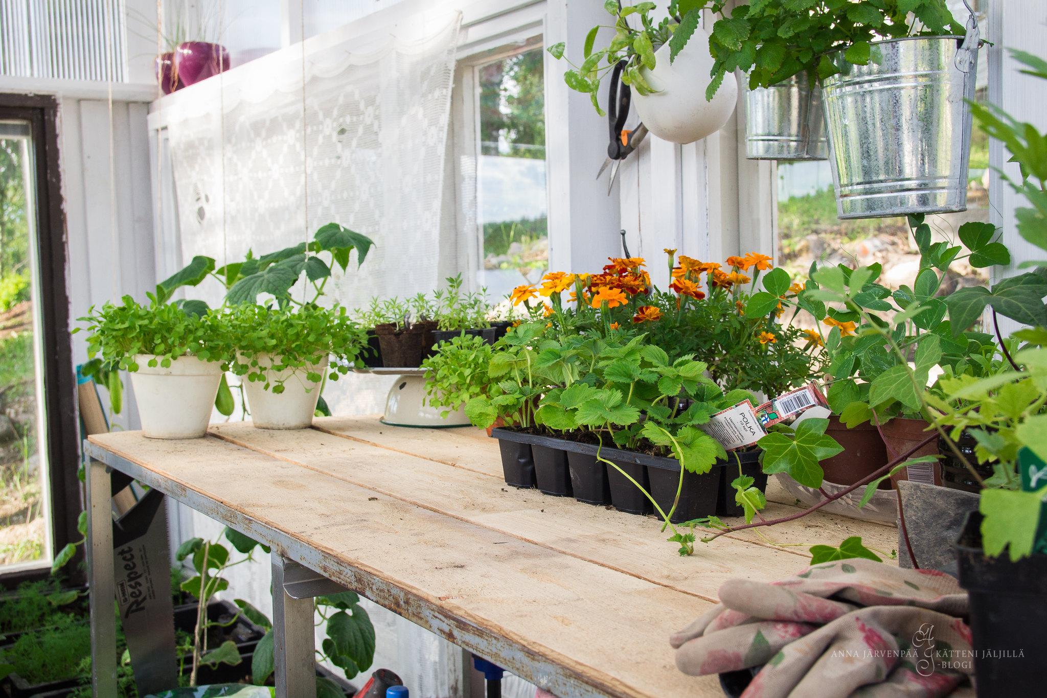 Kasvihuoneessa / In my greenhouse