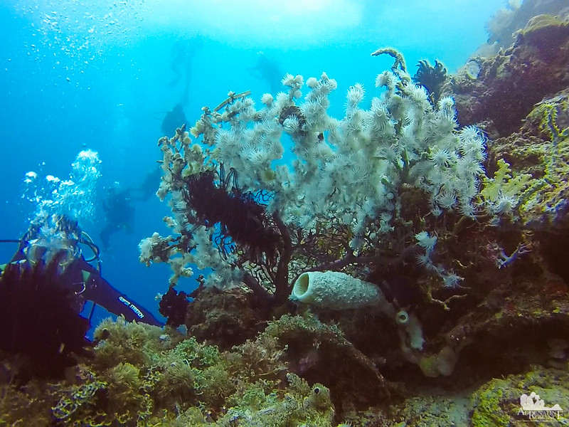 Corals, sponges, and more