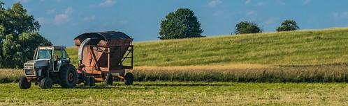 Salix Farmland