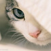 Big blue eye by bratli