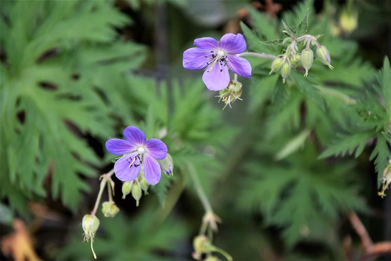 Wild Flowers 20.07 (1)