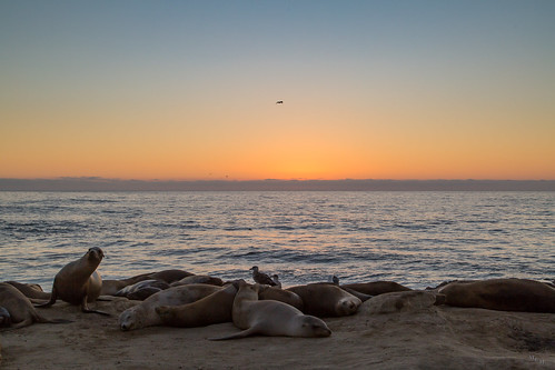 photosbymch sunset landscape seals ocean pacificocean pointlajolla lajolla sandiego california usa 2016 canon 5dmkiii beach summer outdoors