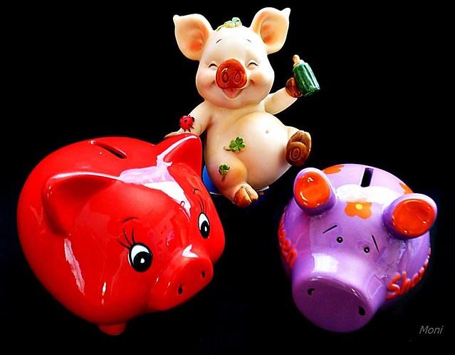 Three pigs ☘️ #MacroMonday, Panasonic DMC-TZ36