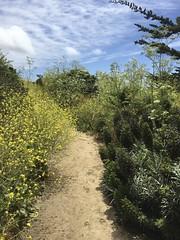 Pathway/Carmel Meadows