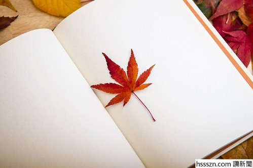 maple-leaf-638022_1280_结果