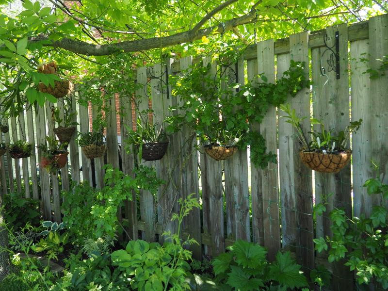 amenagement futur pour mes plantes pendant la belle saison 35494093073_3992523523_o