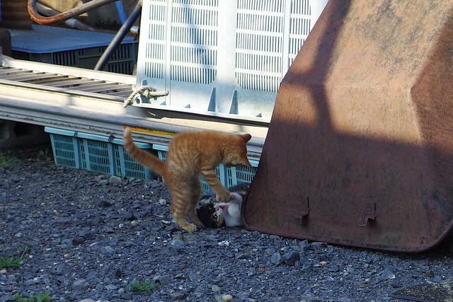 Today's Cat@2017-07-20