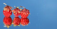 Wild Strawberries (Three) Macro Mondays