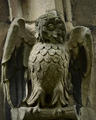 Stony owl