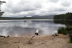 Loch Garten below the Cairgorms