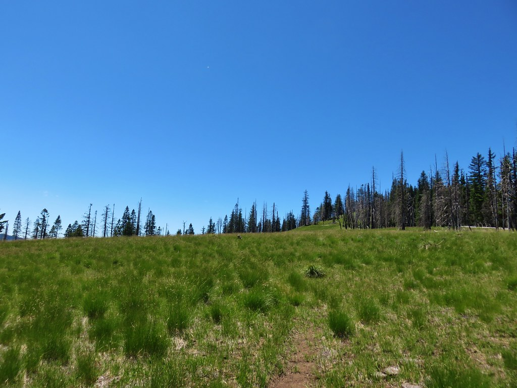 Grasshopper Trail