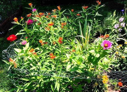 Senior Garden Club