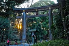 Meiji Shrine Gate