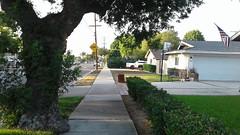 Shaffer Street