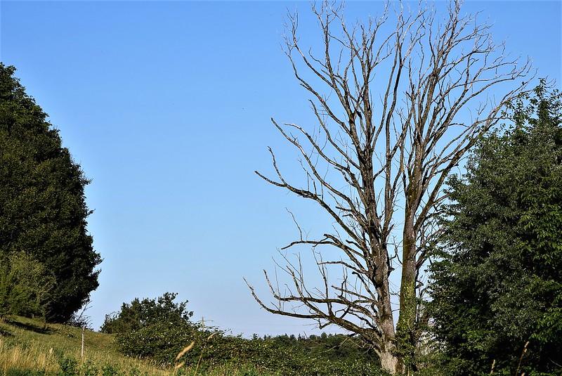 Tree 16.07 (1)