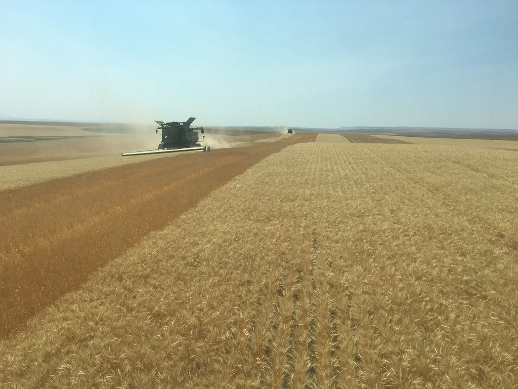 High Plains Harvesting 2017 (Odendaal)