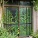 Indoor Plants by mrcraige