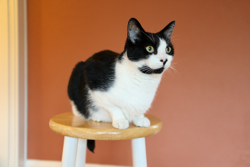 Our cat Boo sits on a stool
