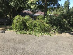 2017-07-18 Tree branch pile