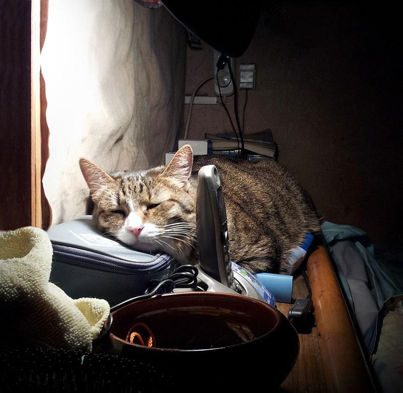 Спят усталые котишки
