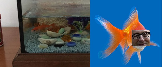 Harold Fish