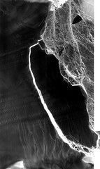 Landsat 'Sees in the Dark' the Evolution of Antarctica's Delaware-sized Iceberg