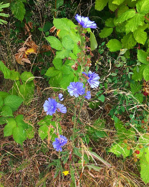Purple wildflowers. 💜