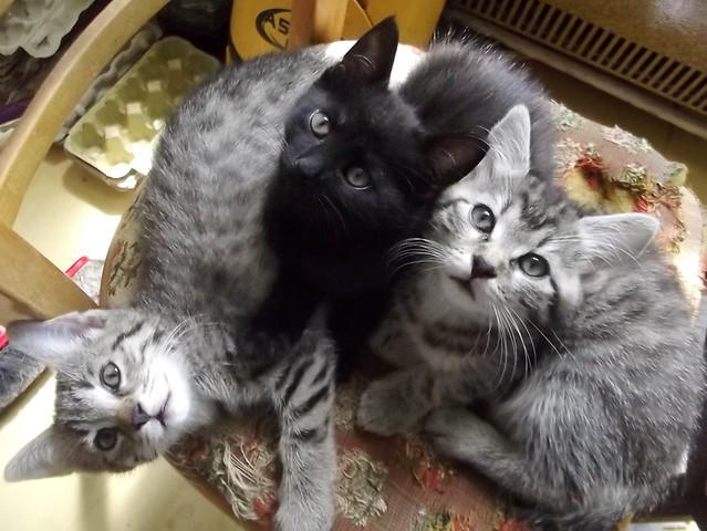 3 kittens, Fujifilm FinePix S2960