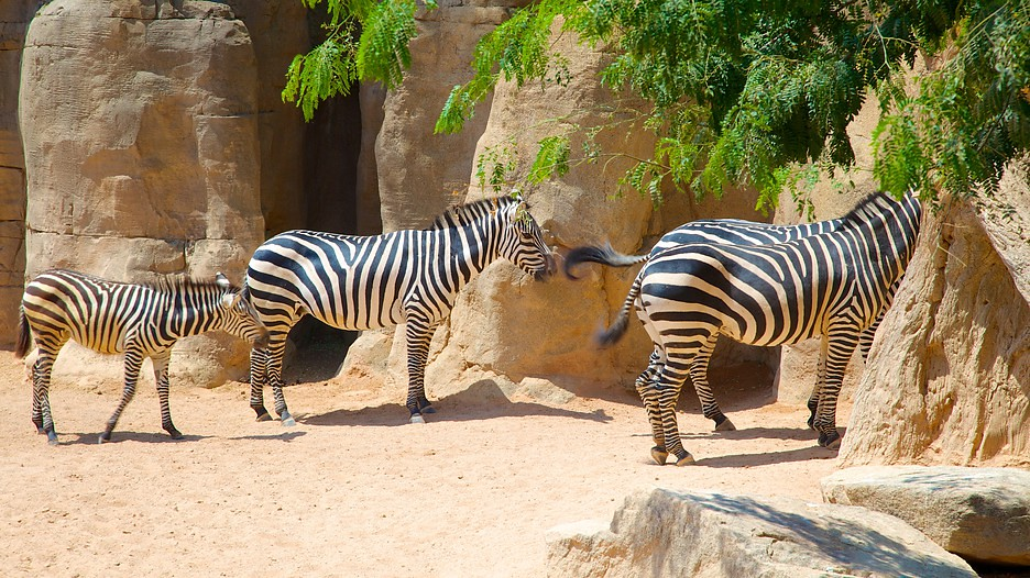 Bioparc-Valencia-Zoo-57337