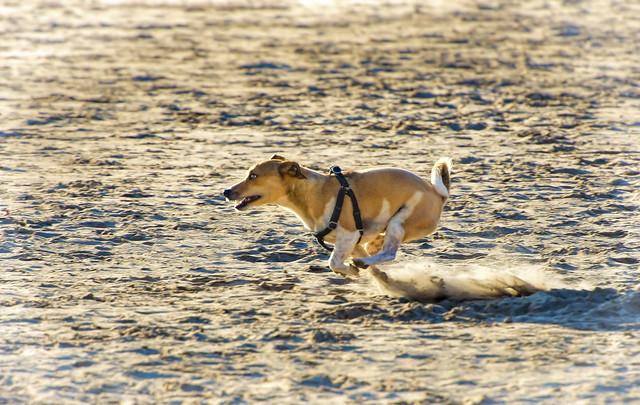 Sand Racing