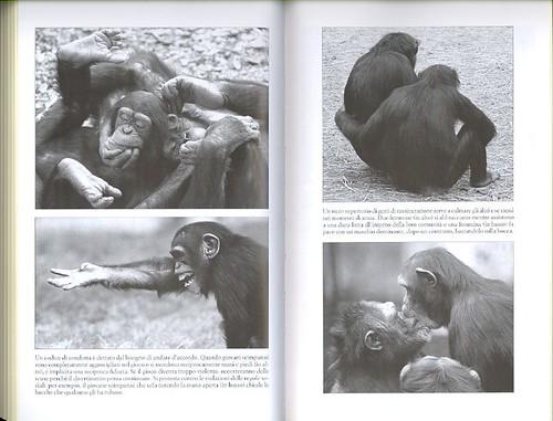 Noi bonobo...