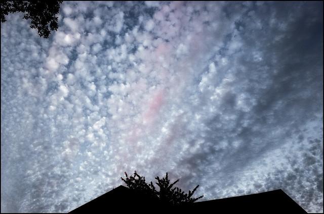 Blushing buttermilk sky