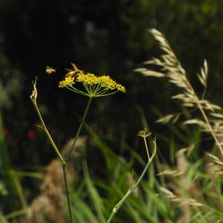 Wasp & Bee