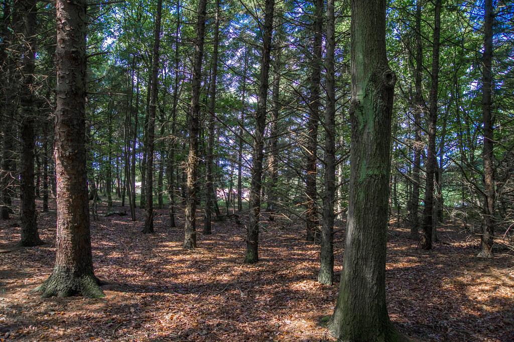 A forest on an island