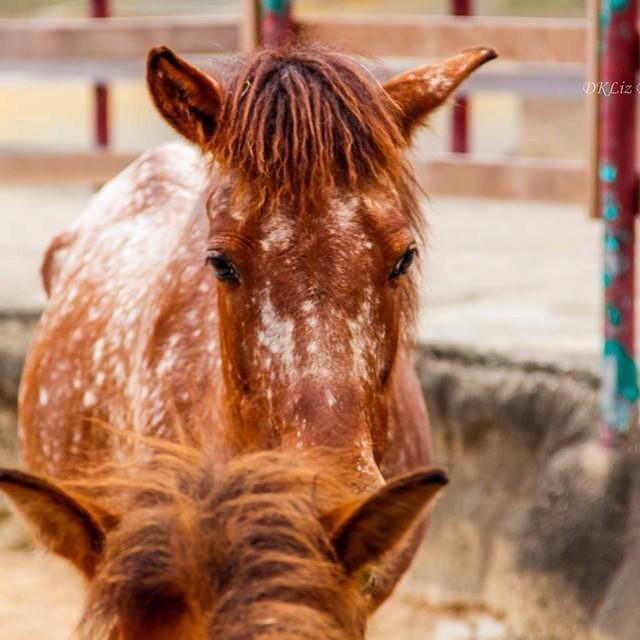 #smashingphotography #nikon #d5300 #horse #animal #photography #nature #love
