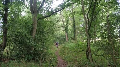 3. Woodland stretch on Oxfordshire Way