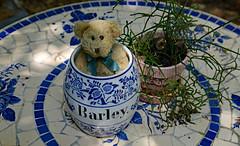 Bear in a Barrel