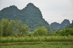 Agriculture with a backdrop of karsts