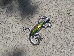 Art Lizard