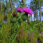 Photos des lecteurs | Couleurs des bois - fleurs des forêts