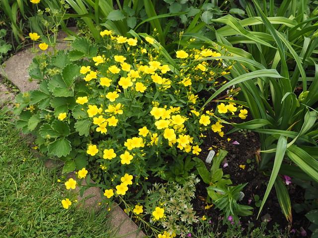 Récolte des semences, plante par plante - Page 5 35046062004_e3b1456716_z